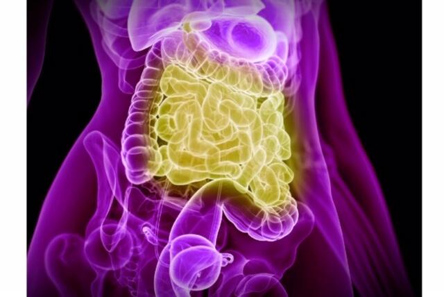 腸内フローラ